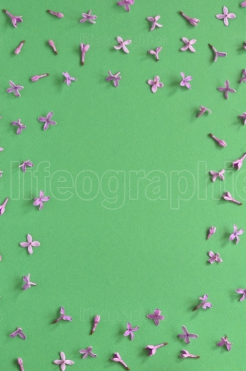 Spring lilac flowers frame