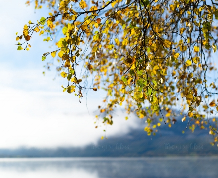 Square Norway autumn tree branches lake horizon