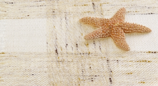 Starfish on background
