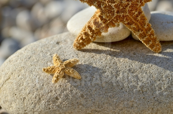 Starfish on the beach as summer background