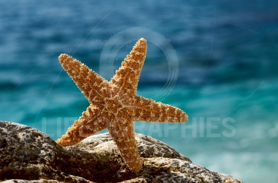 Starfish on the beach in summer