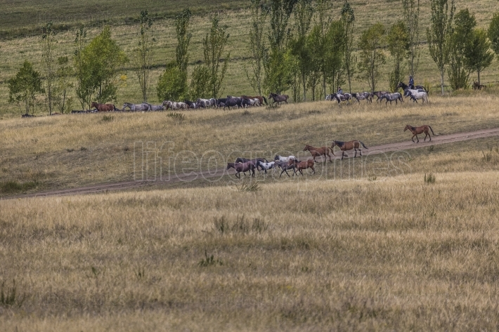 Stockriders with flock in Alay mountains on pastureland - life i