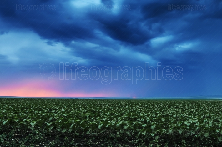 Storm dark clouds flying over field