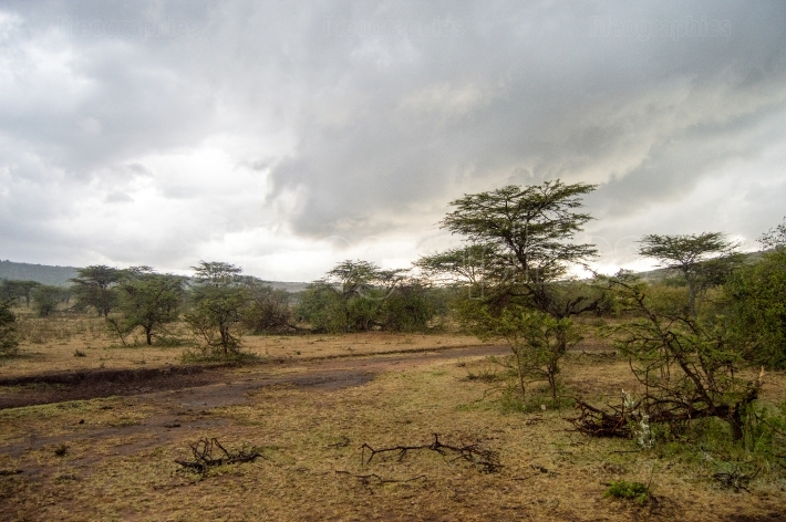 Storm on the savannah and hills of Maasai Mara Park in North Wes