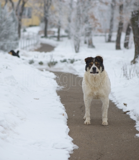 Stray dog in winter time