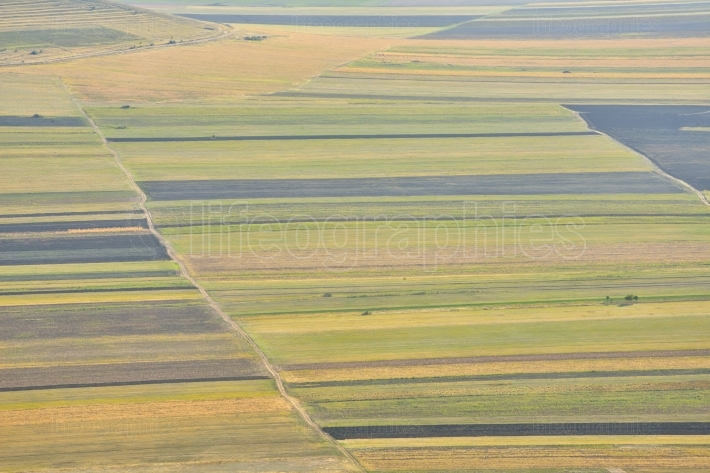 Stubble Fields in Dobrogea