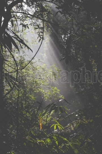 Sunlight rays pour through leaves in a rainforest at sri lanka