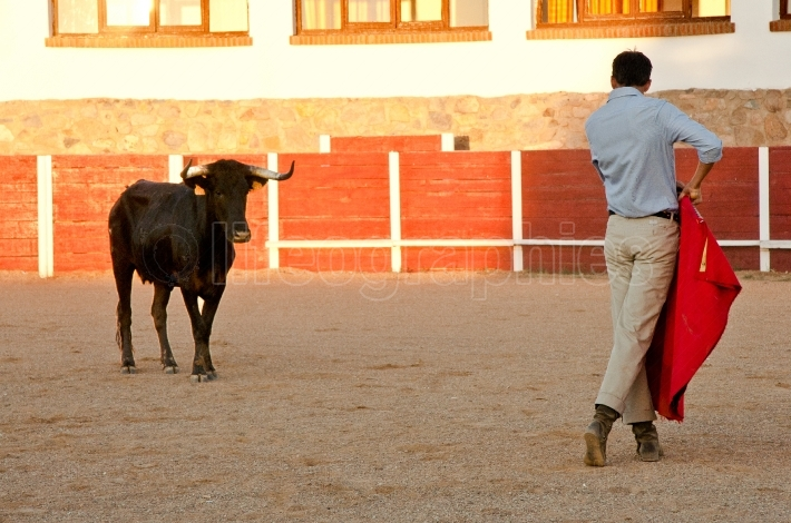 The bullfighter placing