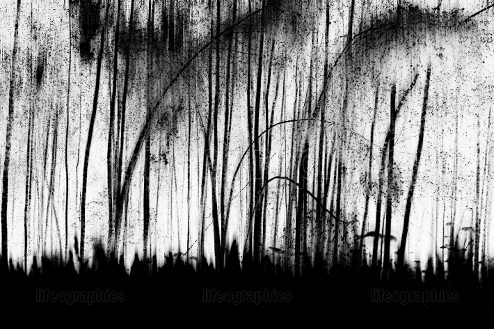 Tilted black and white trees on field backdrop