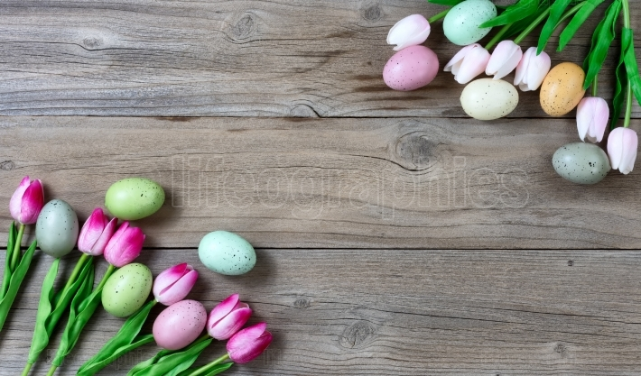 Tulips and Colorful eggs for Easter on Rustic wooden background