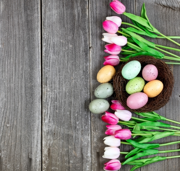 Tulips and eggs on vintage wooden planks for Easter Background