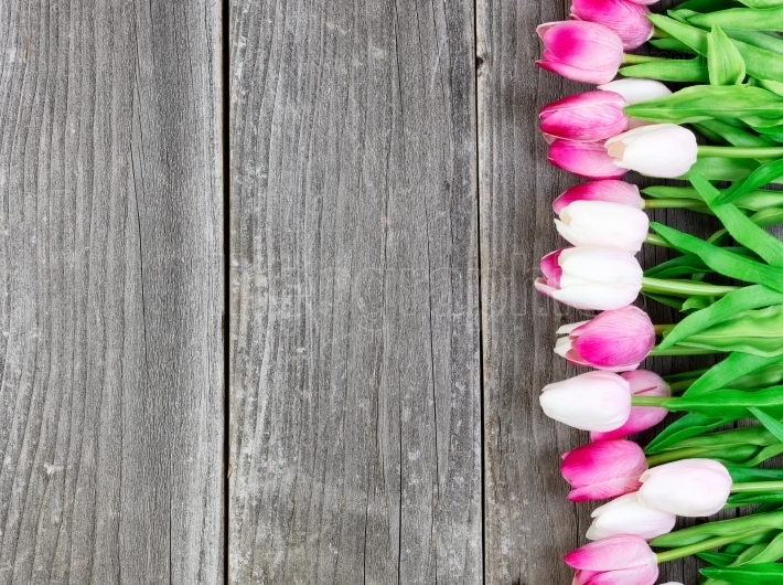 Tulips on vintage wooden planks for Easter Background