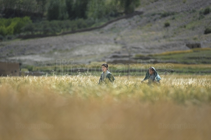 Two girls walking through the field of wheat