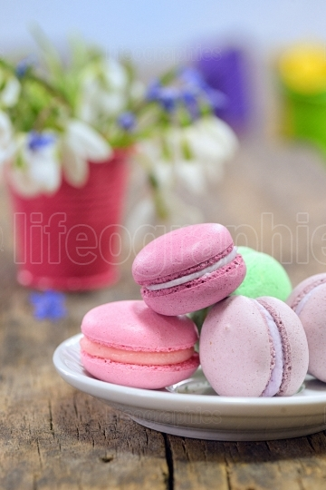 Variegated sweet macaroons and spring flowers