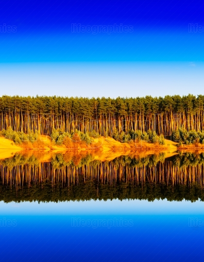 Vertical vibrant wood forest river reflections landscape backgro