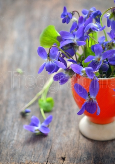 Violet flowers of spring on weeden table