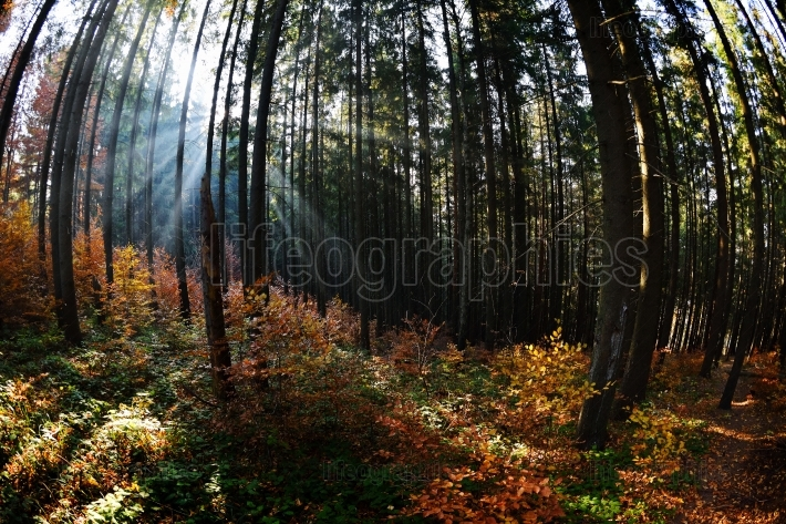 Warm autumn scenery in a forest, with the sun casting beautiful