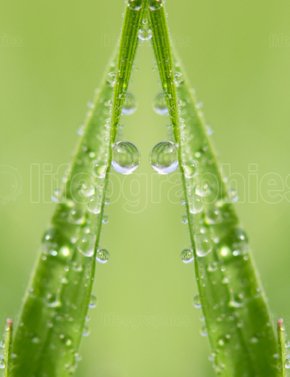 Water drops on green grass in spring season