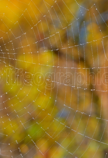 Web closeup on the forest