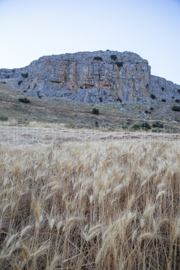 Wheat field at mountain range of Antequera