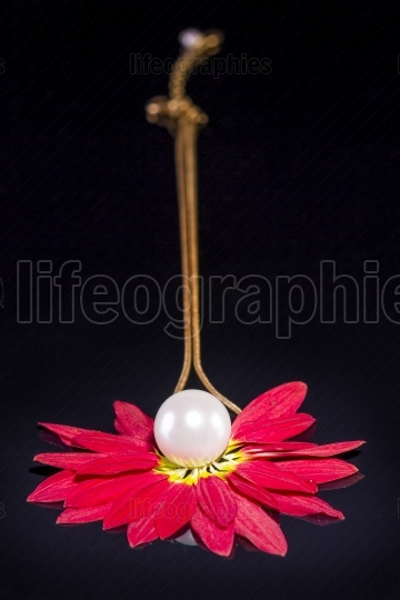 White pearls necklace over red petals on black