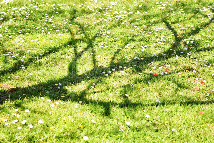 Withered tree shadow over a green meadow