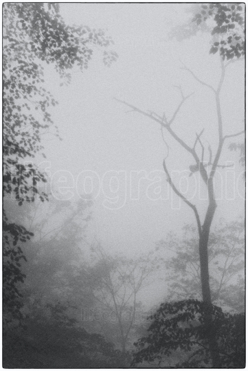 Wonderfull landscape covered by fog with tree covered by chinese myth