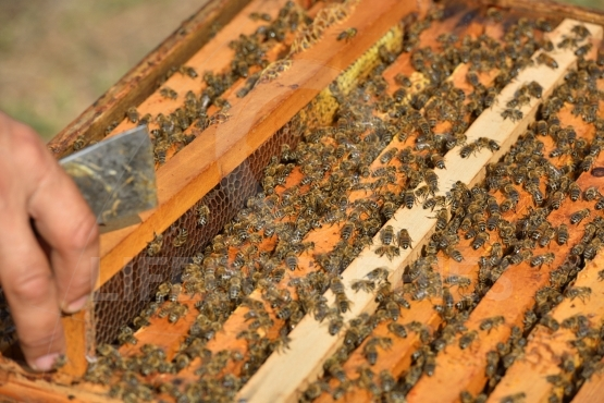 Working bees on wooden frames