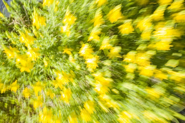 Yellow floral abstract