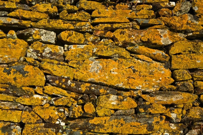 Yellow lichen backgrounds