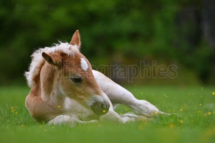 Young cute foal outdoor
