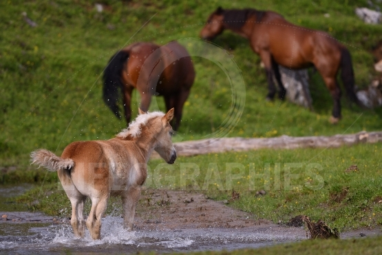 Young cute foal playing outdoor